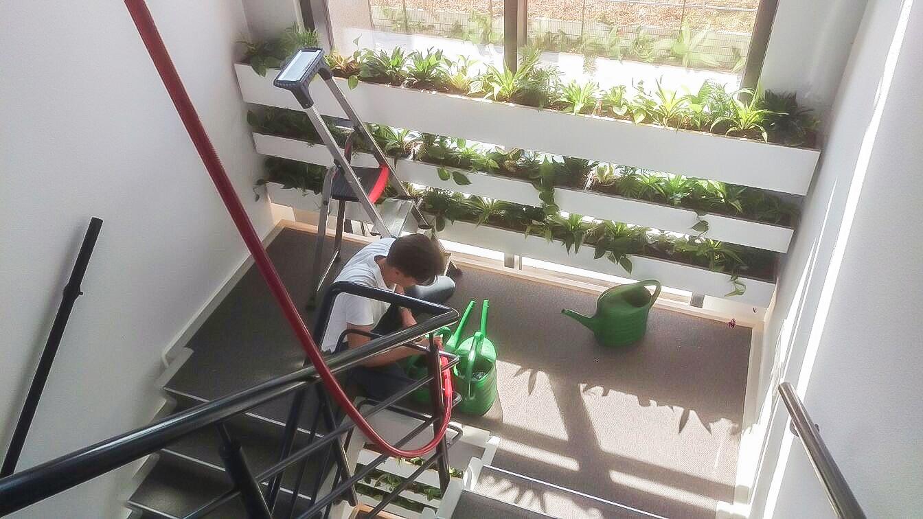 Onderhoud planten