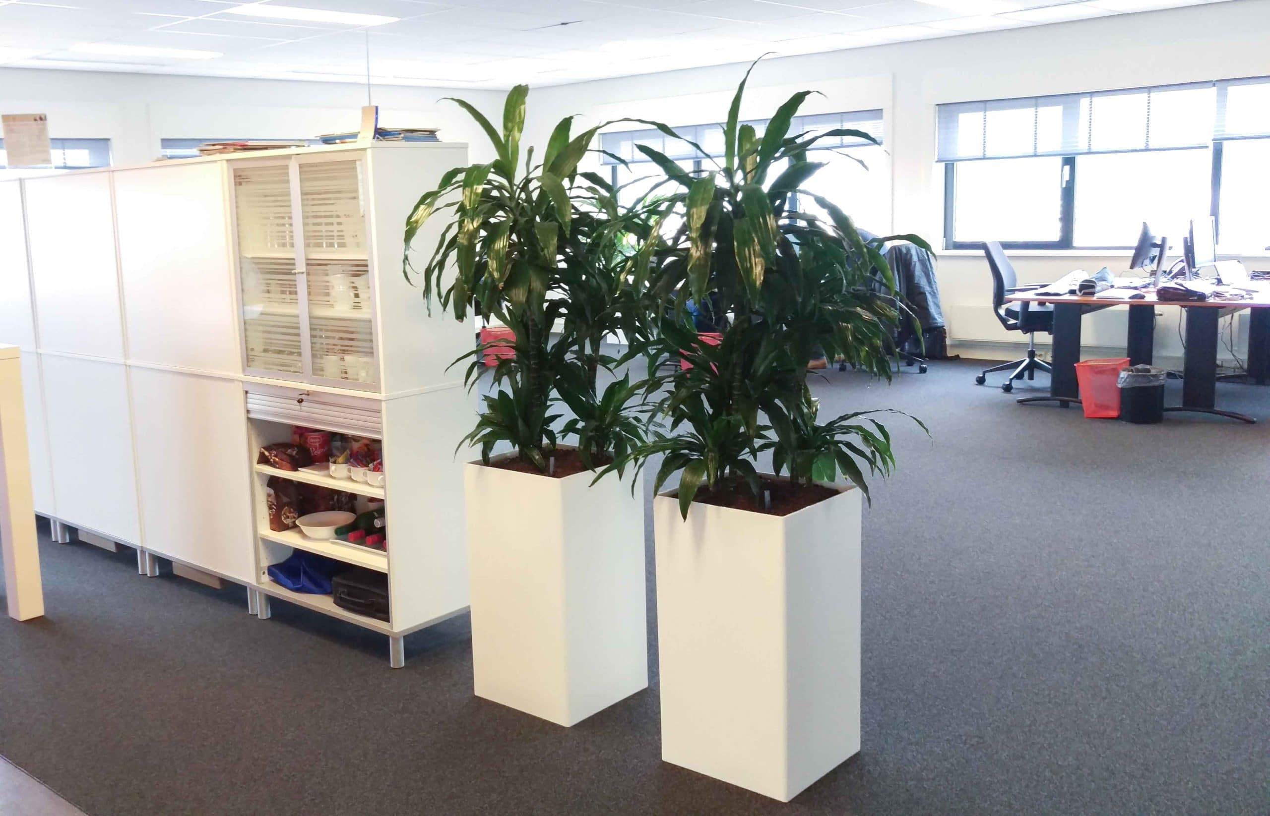 Kantoor planten Utrecht