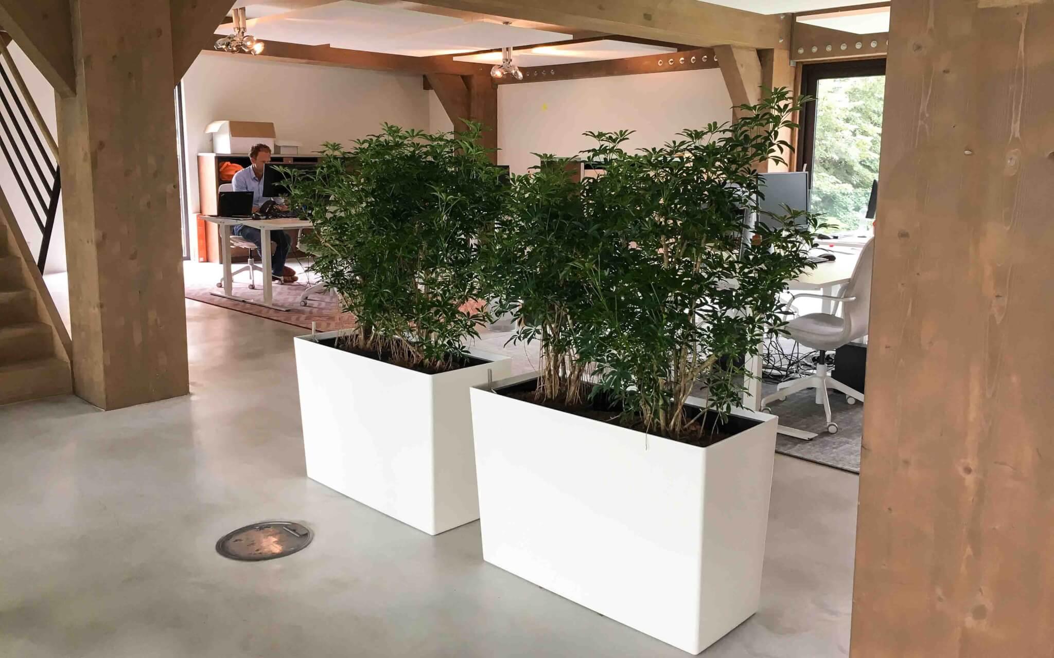 Kantoorplanten Rotterdam