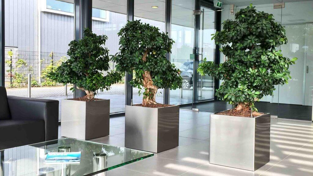 Onderhoud van planten