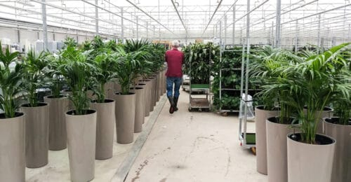 Levering interieurbeplanting