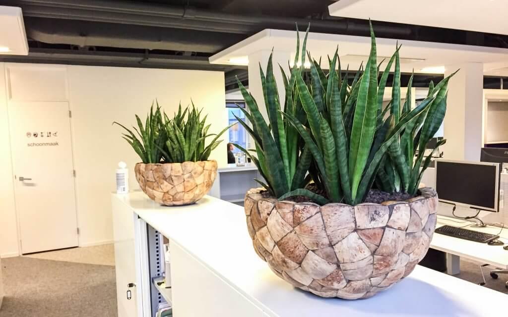 Planten Op Kantoor : Kantoorplanten in rotterdam hoogendoorn projectbeplanting