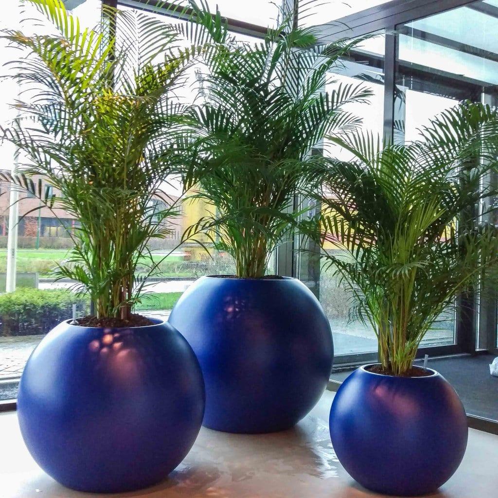 Interieurbeplanting blauwe grote ronde plantenbak interieurbeplanting