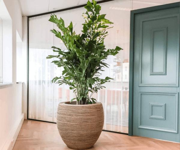 planten op kantoor