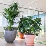 Grote planten Amsterdam