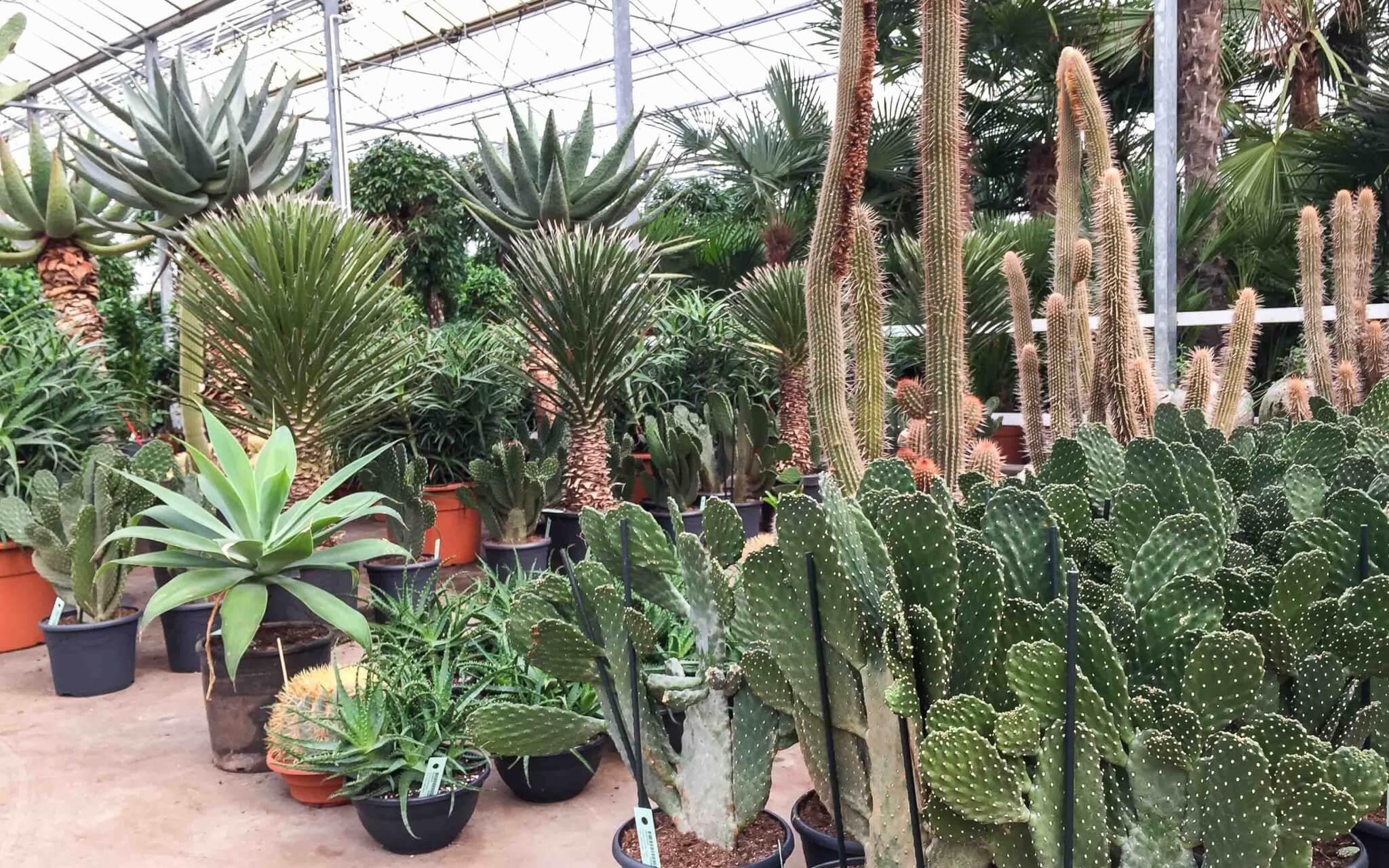 Cactus en vetplant