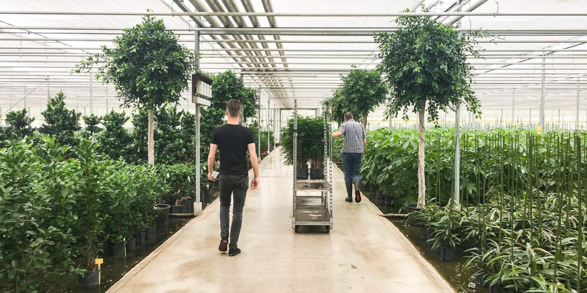 Hydrocultuur plantenkas