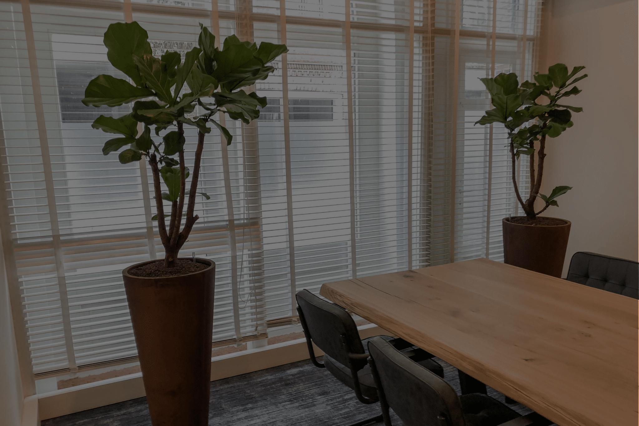 Interieurbeplanting bedrijf