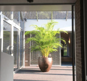 Top 10 kantoorplanten