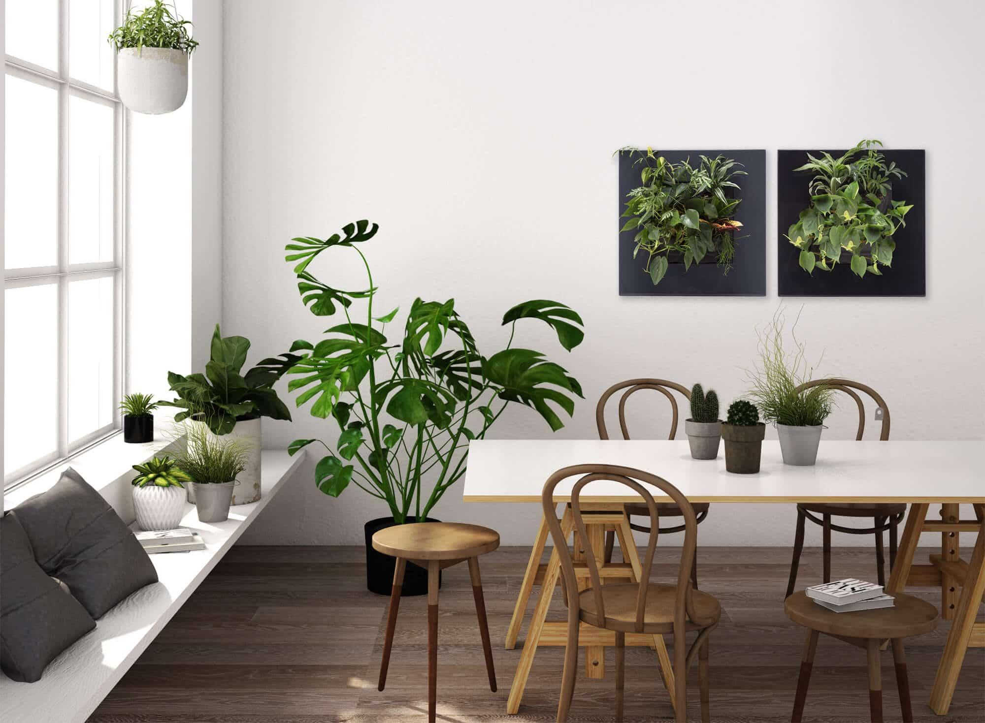 planten aan de muur