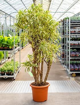 grote planten bedrijven