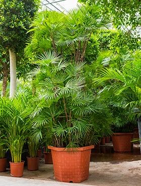 grote plant voor kantoor