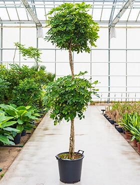 top 7 grote kantoorplanten