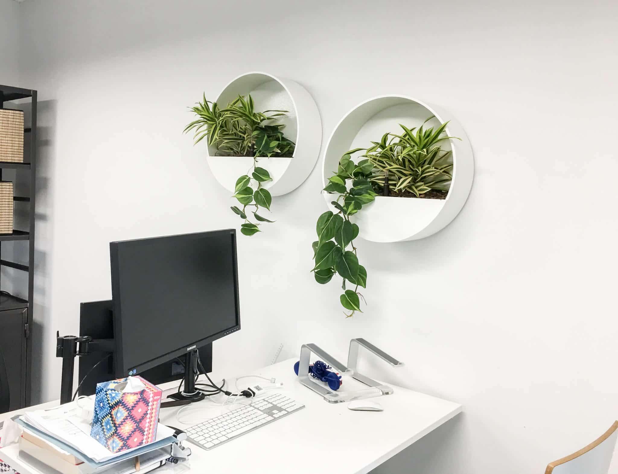 Wallplanters met verschillende hangplanten bij iChoosr