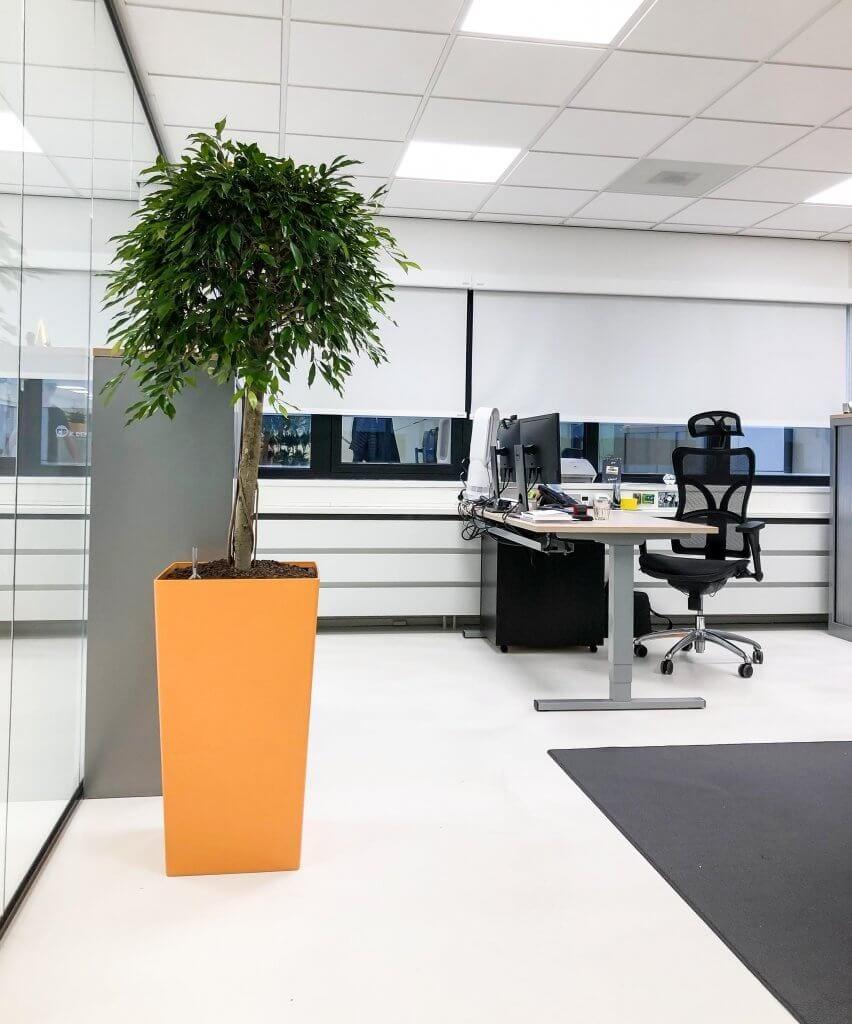 Planten voor kantoor