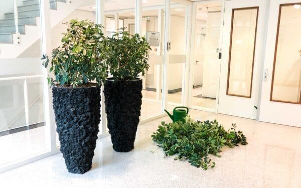 Onderhoud planten kantoor