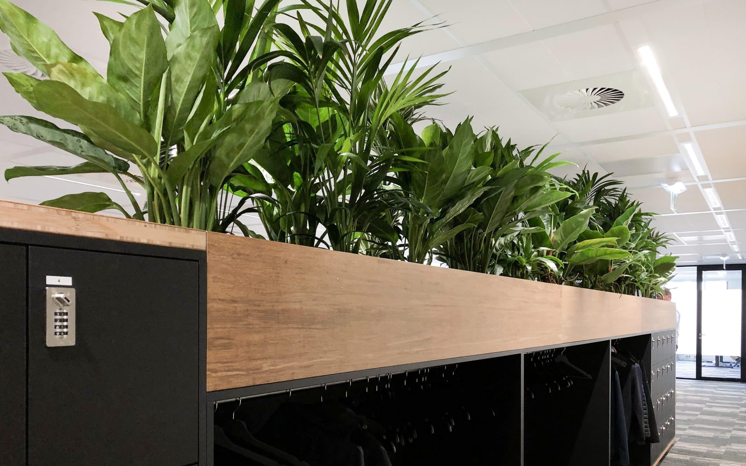 Planten in meubilair zorgen voor groene wand