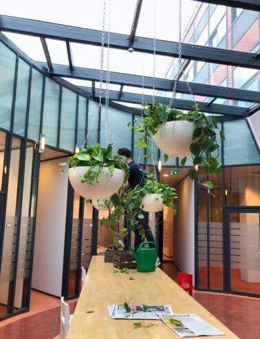 Onderhoud interieurbeplanting in Houten