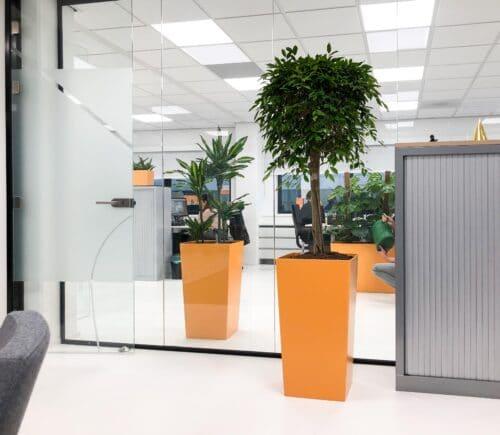 Verbeter de luchtkwaliteit op kantoor met planten