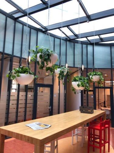 hangplanten voor kantoor