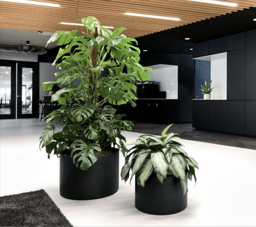 Een prettige werkomgeving met planten