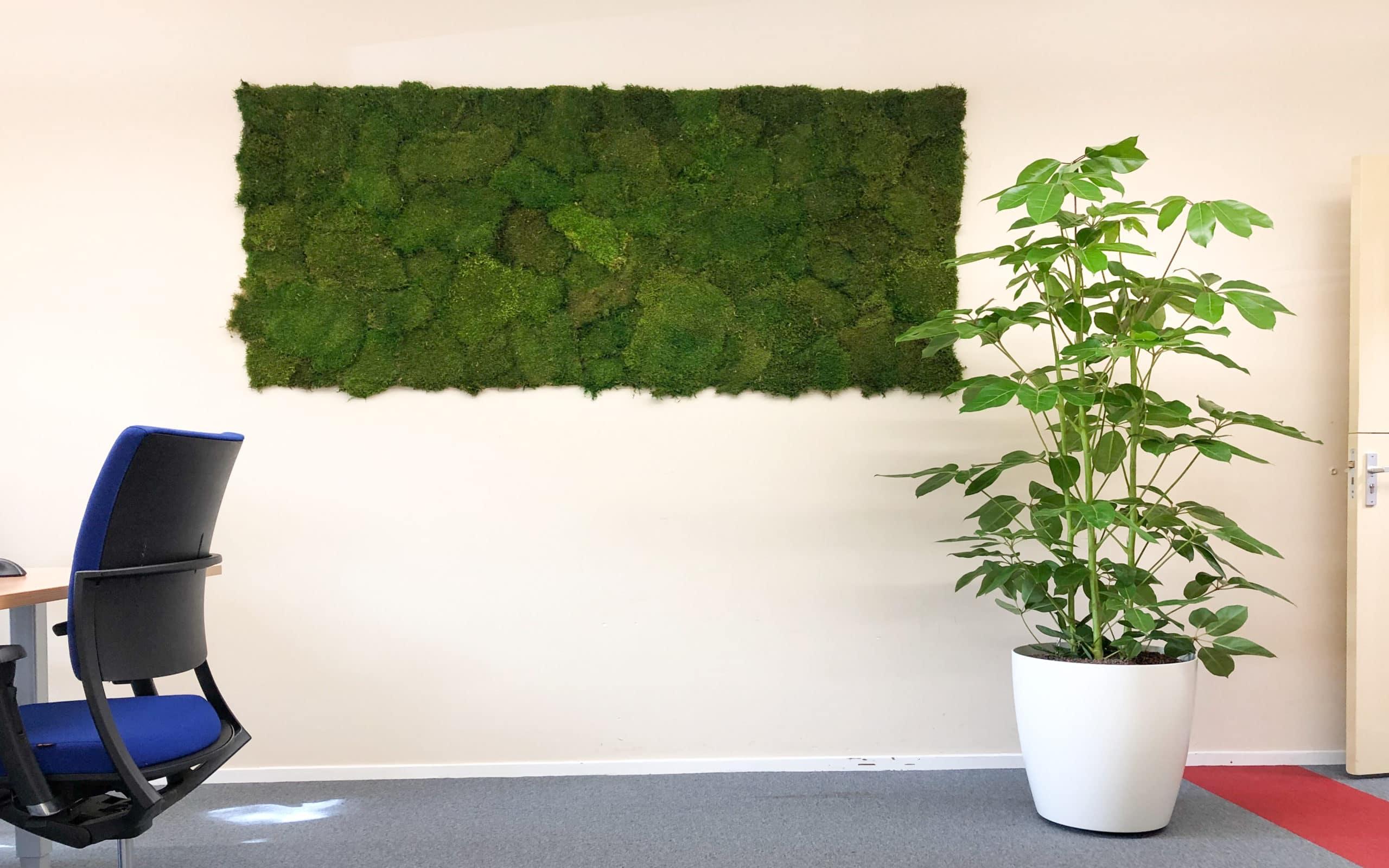Platmos moswand bij Eskes media groene wand