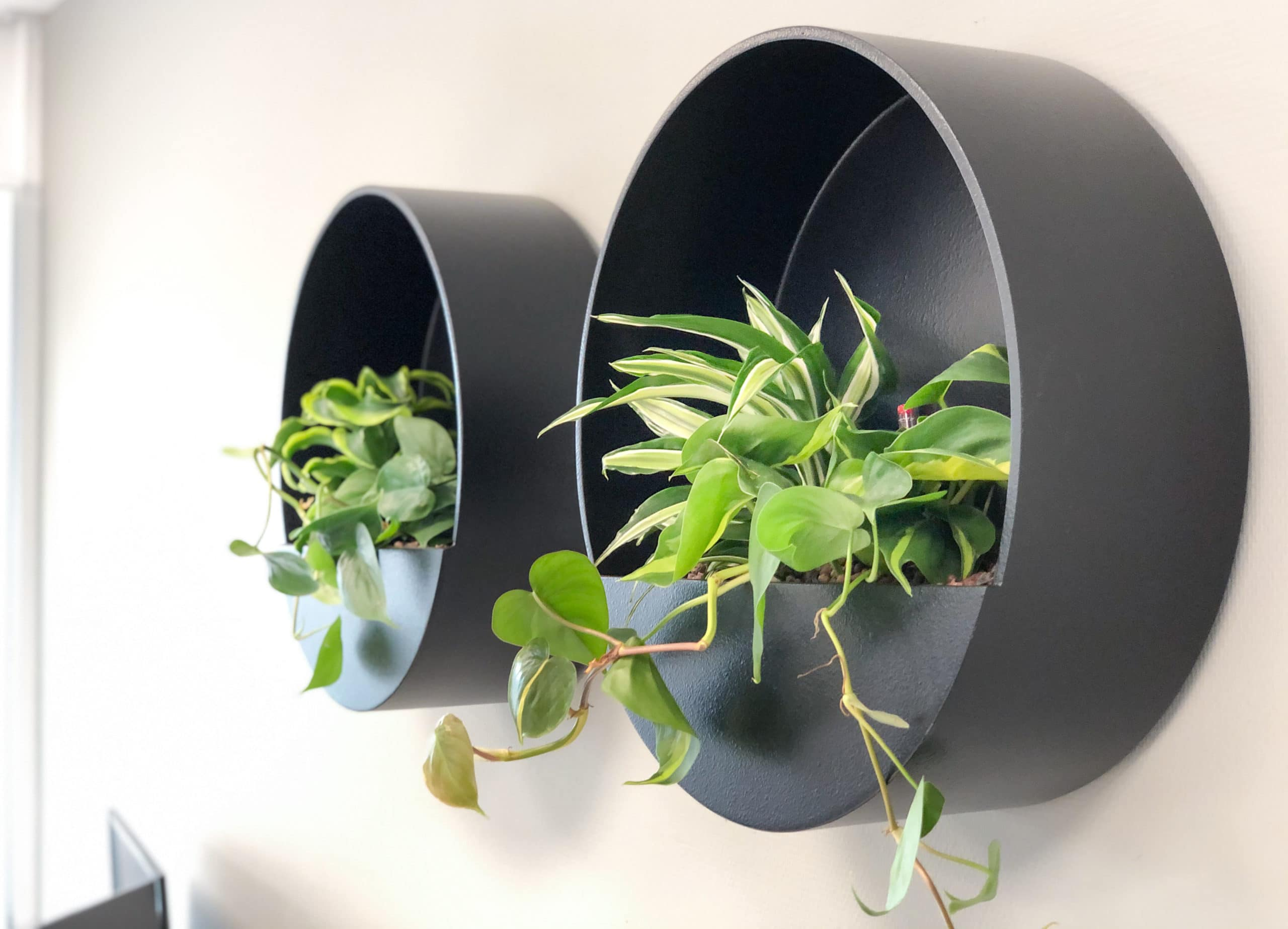 Close up beplanting in ronde wall planter groene wand green wall