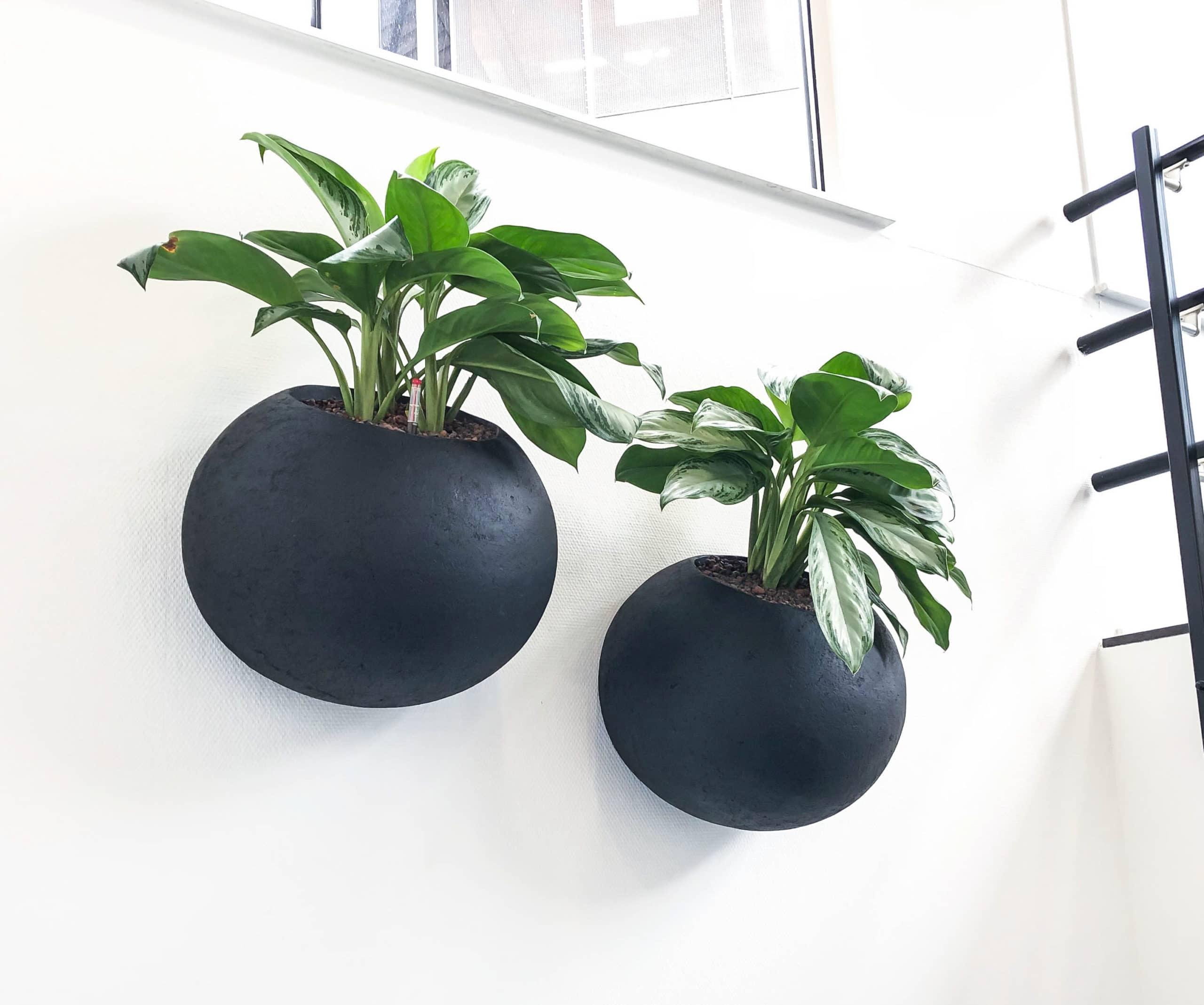 ronde zwarte wall planter groene muur green wall bij Golden Agri