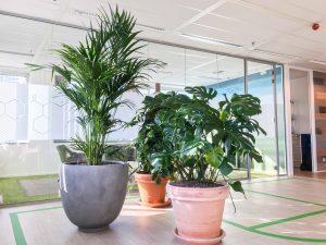 Verschillende planten voor kantoor