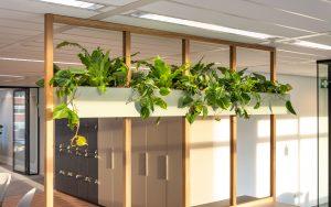 Trends kantoor planten