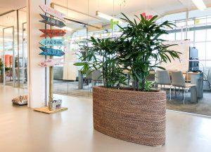 Trends kantoorplanten