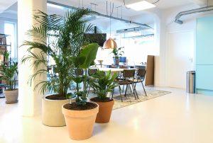 Interieurtrends kantoor planten