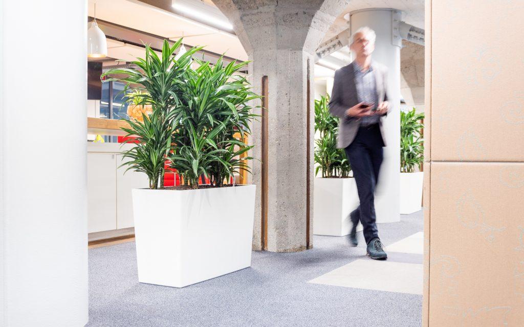 Room Divider Amsterdam met planten