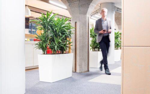 Roomdivider met planten