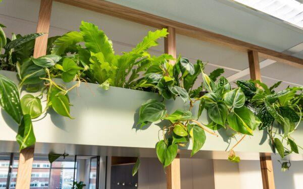 close-up van hydro planten