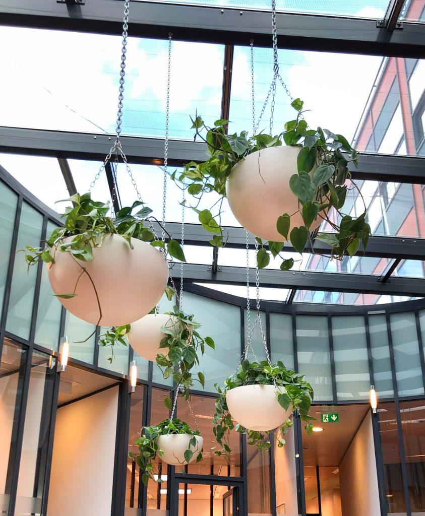 Hangschalen met hydro planten