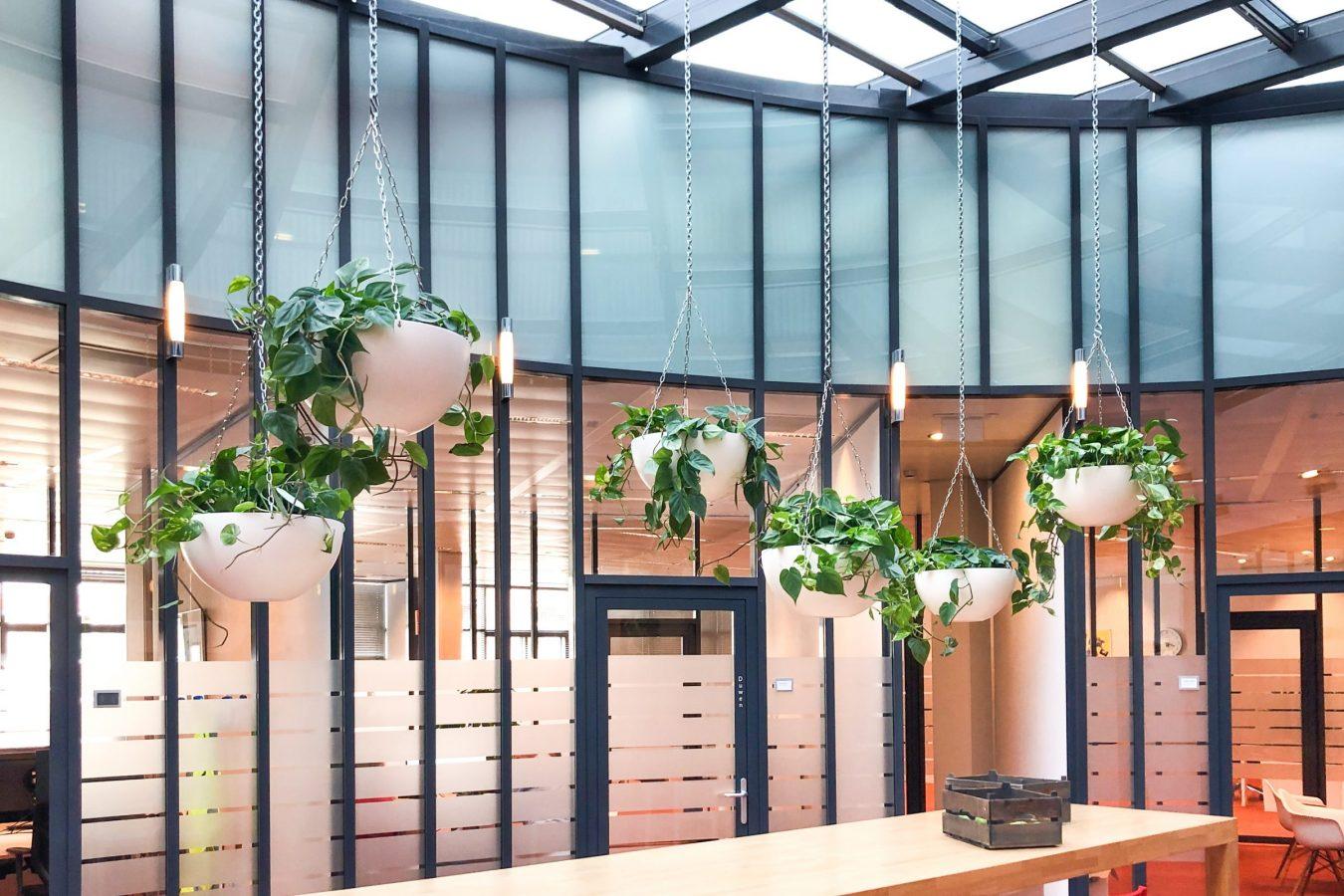 Hangplanten in Cascara bij Ymere Oost._