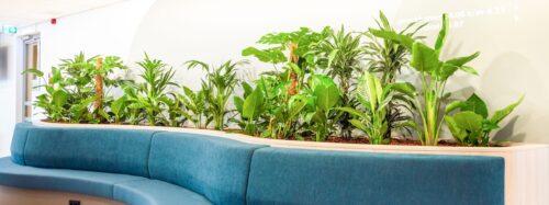 Prettige werkomgeving met veel planten