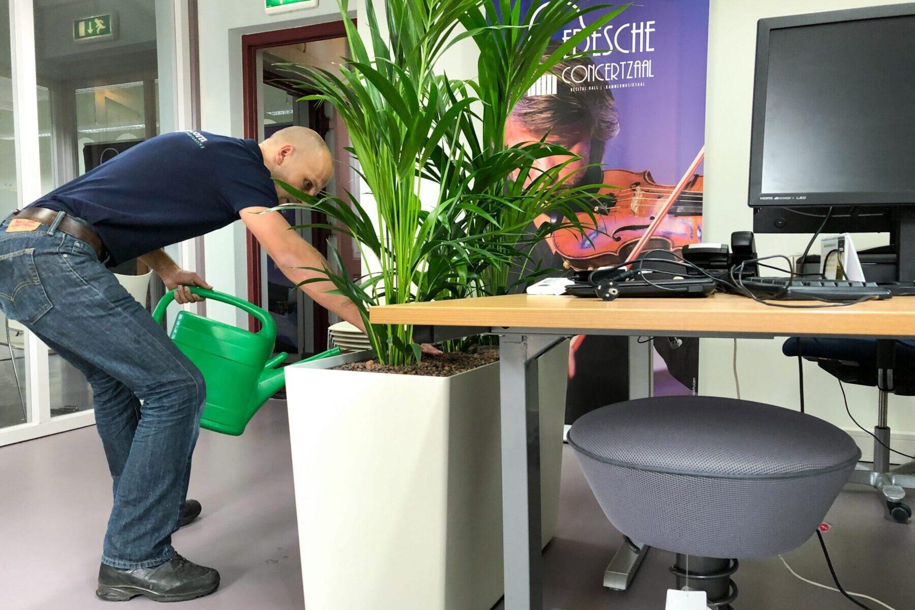 Onderhoud kantoorplanten in Utrecht