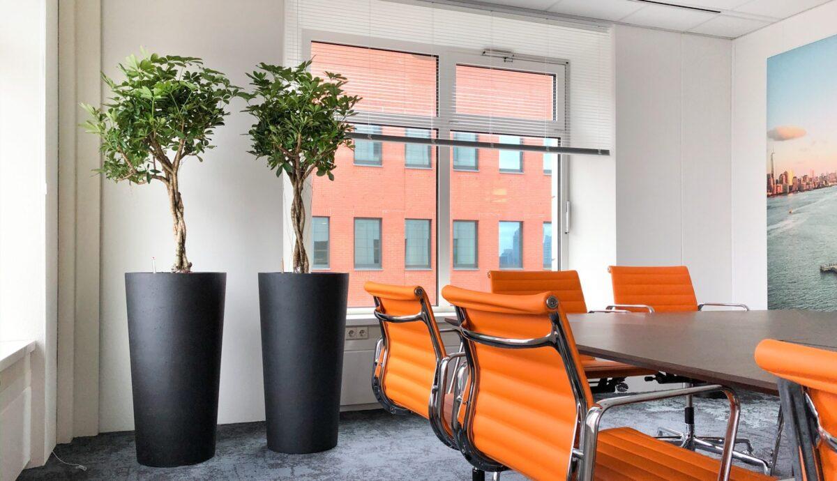 kantoorplanten voor een betere luchtvochtigheid