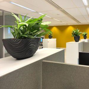 De kantoorplant van de maand maart
