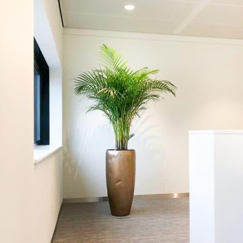 Grote hydro plant op kantoor
