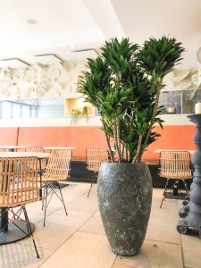 Spectaculaire plant in restaurant