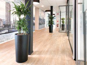 De perfecte plant voor kantoor
