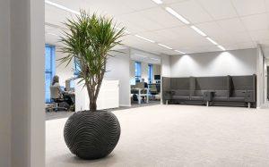 Grote Dracaena in plantenbak op kantoor