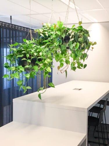Hang planten huren of leasen