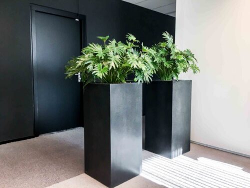 Interieur beplanting leasen