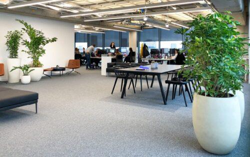Veel planten huren voor kantoor