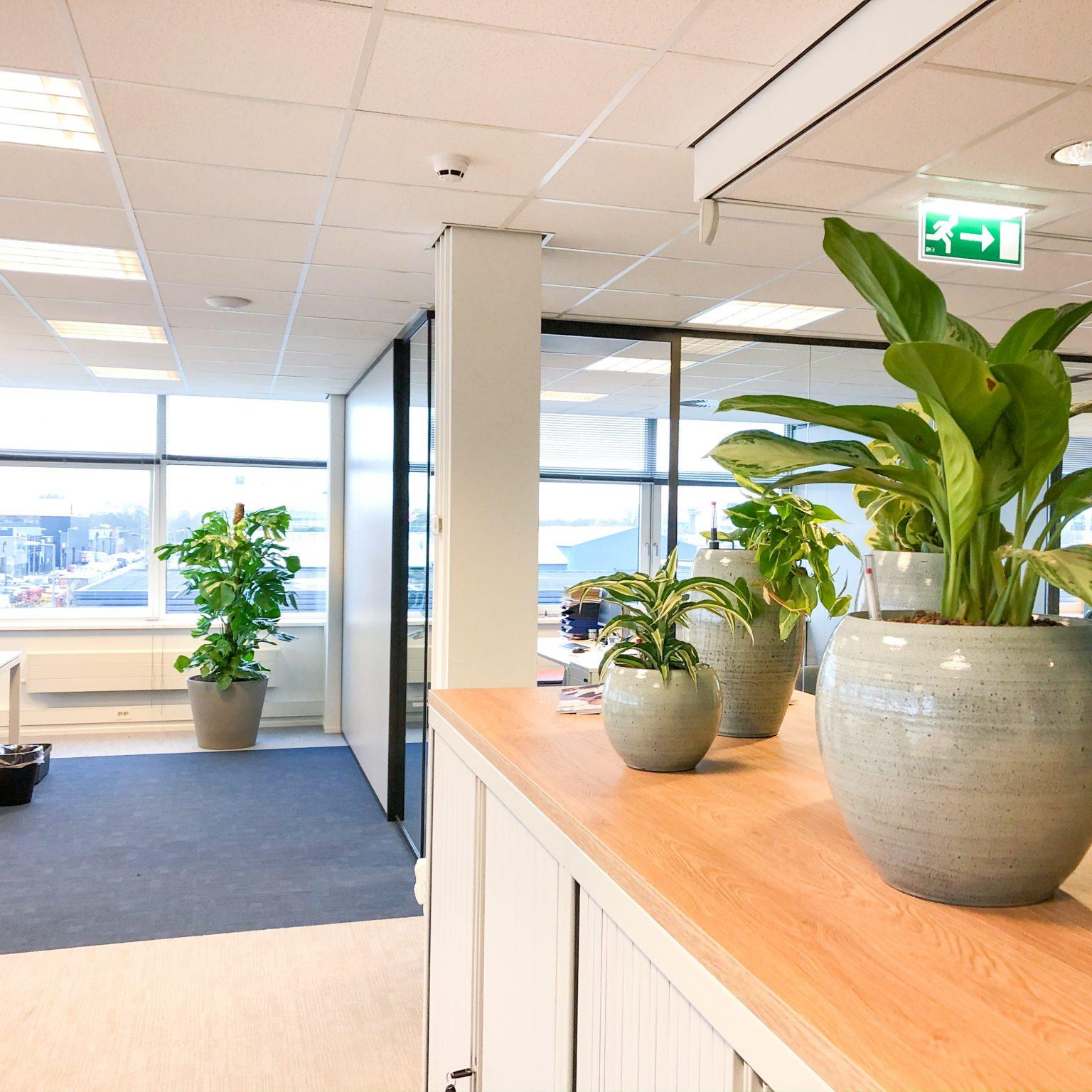 Verschillende planten om te huren of leasen