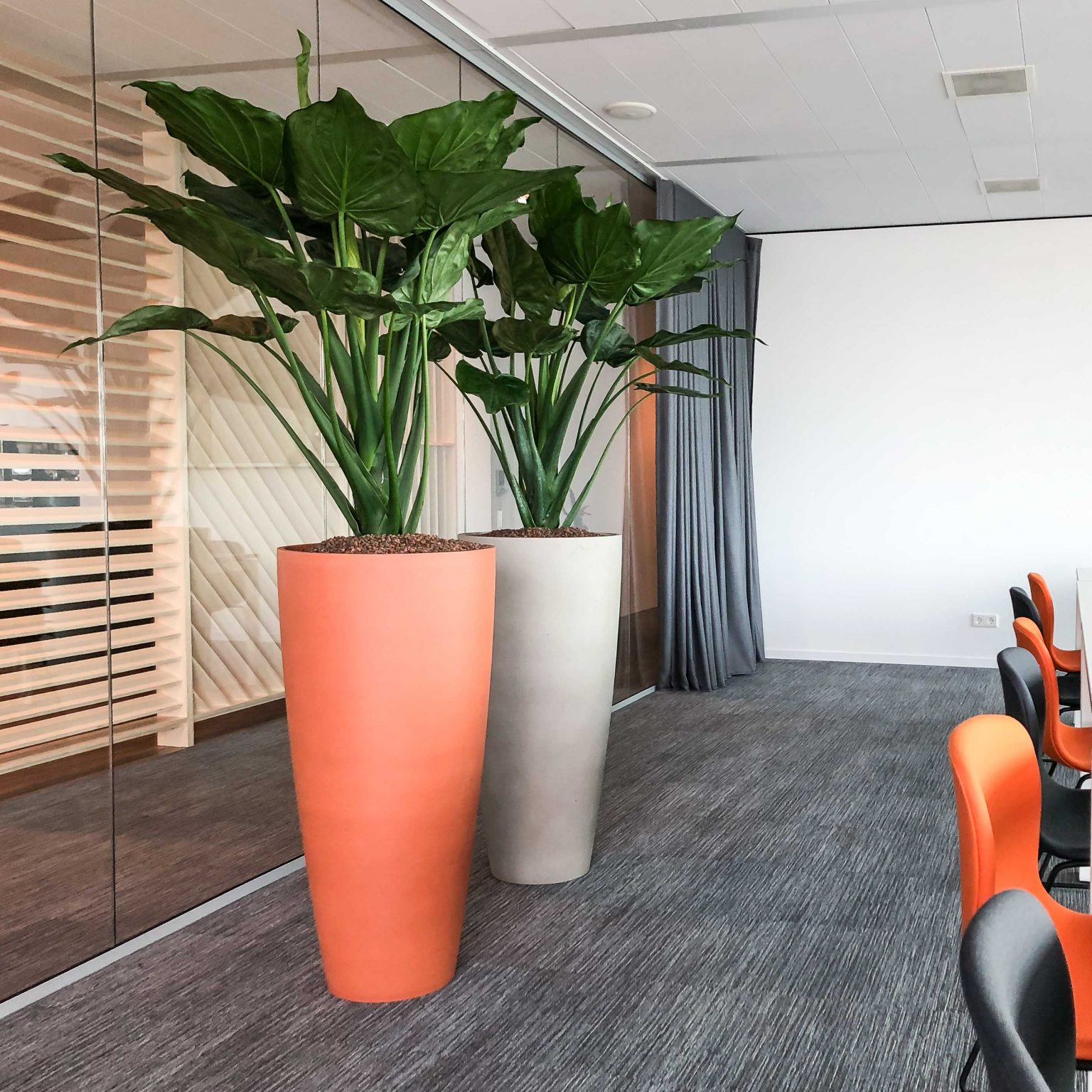 Colourfull plants in office
